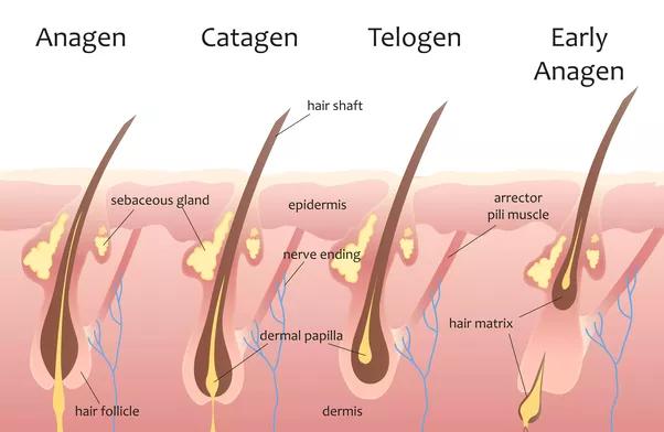 آیا لیزر موهای نازک را کلفت یا ضخیم تر میکند